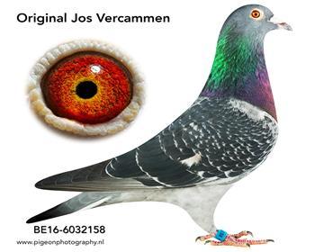 8乔斯佛卡门BE16-6032158