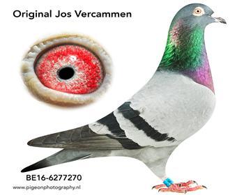 4乔斯佛卡门BE16-6277270