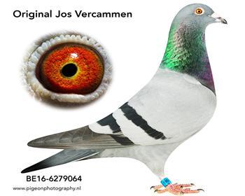 1乔斯佛卡门BE16-6279064