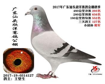 广东欣洋决赛203名