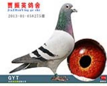 速霸龙201301658275雄