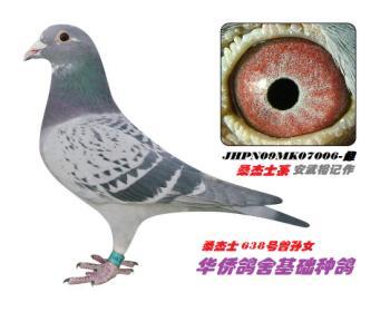 6】JPN09MK07006-雨点花头-砂眼-雌