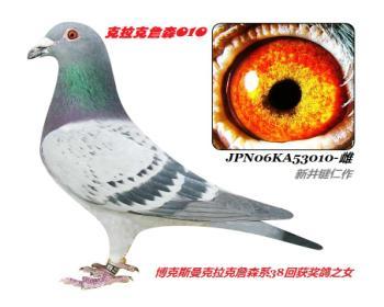 1】JPN06KA53010-浅点-黄眼-雌