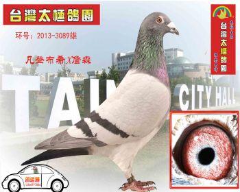 """凡登布希X詹森 冠军X亚军作出""""特级种鸽""""20133089雄"""