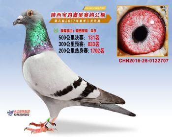 陕西宝鸡鑫昊公棚2017年第九届决赛:第131名