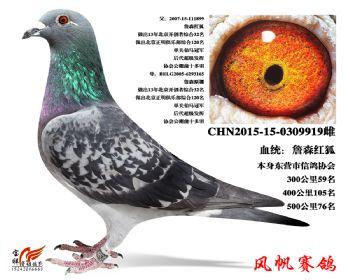 9-成绩鸽(詹森红狐)