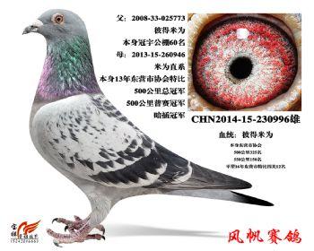 11-成绩鸽(彼得米卫)