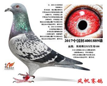 15-天津天水九大团队参赛鸽(6000元)