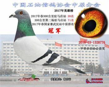 2017年春国家赛武汉赛区中原排名冠军
