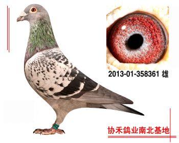 """埃里克.林伯格""""鹰眼""""201301358361 雄"""