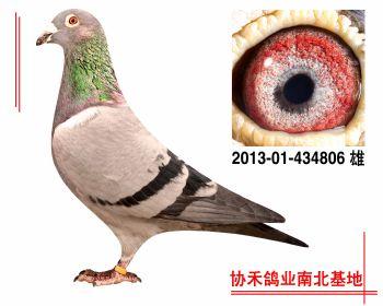 """埃里克.林伯格""""鹰眼""""201301434806 雄"""