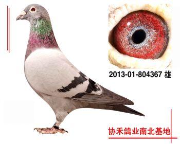 """埃里克.林伯格""""鹰眼""""201301804367 雄"""