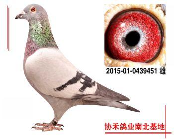 胡本2015010439451 雄