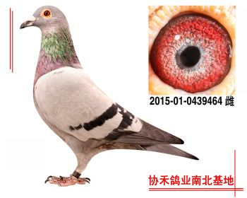 胡本2015010439464 雌
