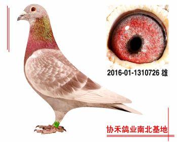 惠翔公棚39名平辈2016011310726 雄
