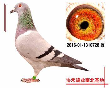 胡本2016011310728 雄