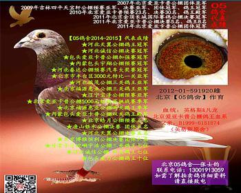 北京05鸽舍  爱亚卡普鸽王血系