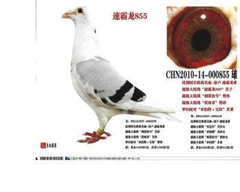 (3)速霸龙855