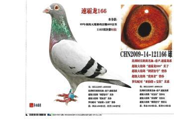 (5)速霸龙166