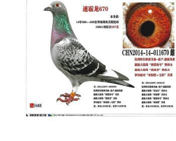 (14)速霸龙670