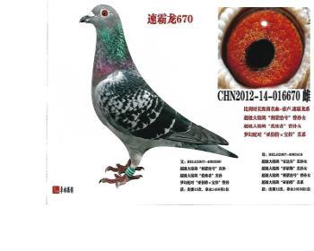 (15)速霸龙670