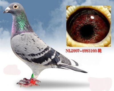凡龙银色公主号血系,NL20074083160