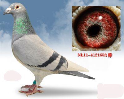 多次入奖,银色公主号血系NL114121655