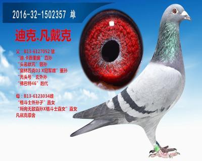 鸟类鸽动物教学图示鸟梦幻400_320蝙蝠在哪里抓大鸽子图片