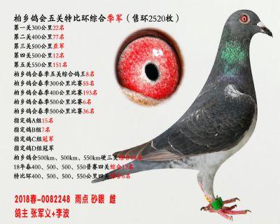 五关综合鸽王季军