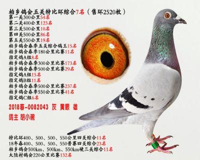 五关综合鸽王7名