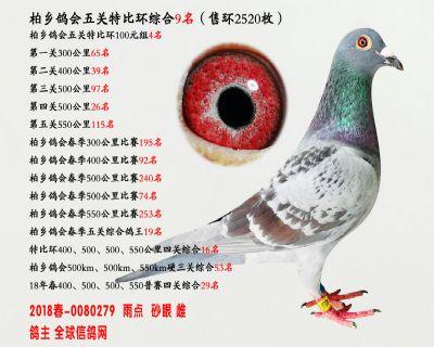 五关综合鸽王9名