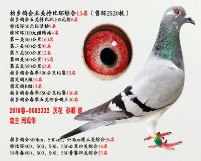 五关综合鸽王13名