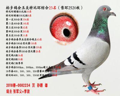 五关综合鸽王23名