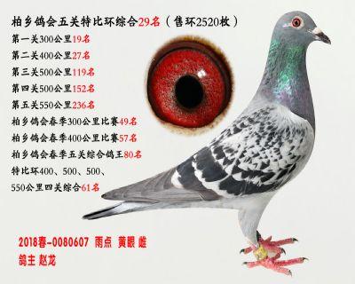 五关综合鸽王29名
