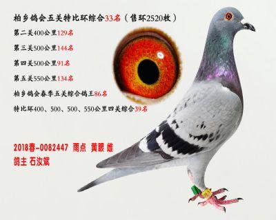 五关综合鸽王33名