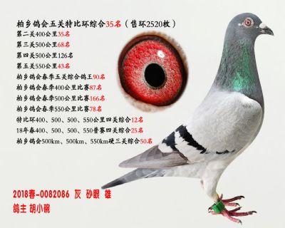 五关综合鸽王35名