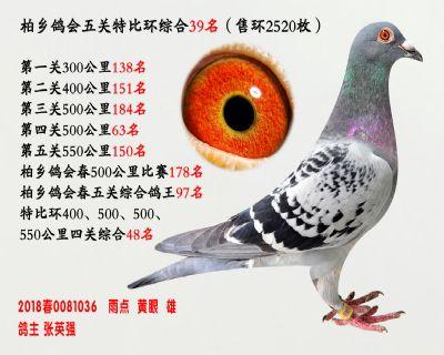 五关综合鸽王39名