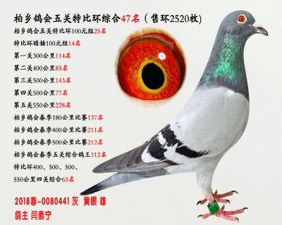 五关综合鸽王47名