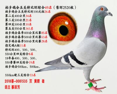 五关综合鸽王49名