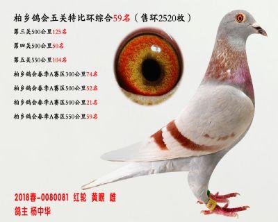 五关综合鸽王59名