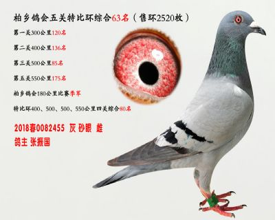 五关综合鸽王63名