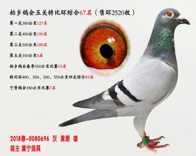 五关综合鸽王67名
