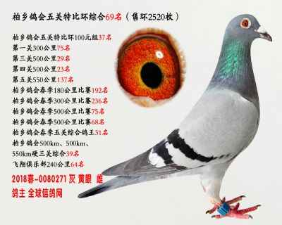 五关综合鸽王69名
