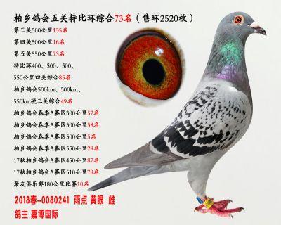 五关综合鸽王73名
