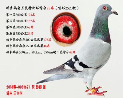 五关综合鸽王75名