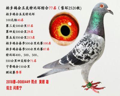 五关综合鸽王77名
