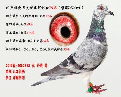 五关综合鸽王79名