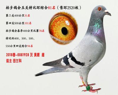 五关综合鸽王81名