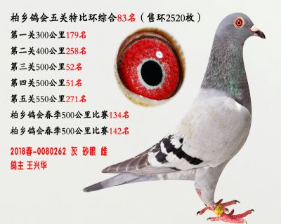 五关综合鸽王83名