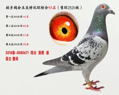 五关综合鸽王93名